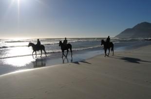 Horses_on_Noordhoek_beach_2